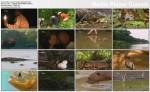 Olbrzymie Amazo?skie Szczêki / Amazonia's Giant Jaws (2007) PL.720p.HDTV.x264 / Lektor PL