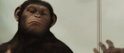 Geneza planety ma³p / Rise of the Planet of The Apes (2011)  PL.DVDrip.AC3.XviD.CiNEMAET-SAVED |Lektor PL