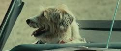 N�dzne psy / Straw Dogs (2011) PL.BDRip.XViD.AC3-J25 / LEKTOR PL  +RMVB